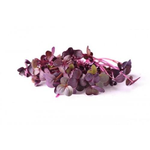 Микрогрин фиолетового редиса