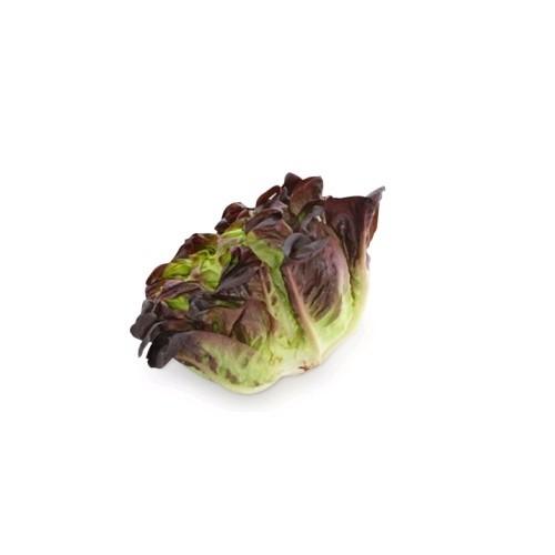Салат дубовий лист червоний