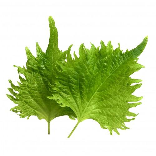 Листья шисо