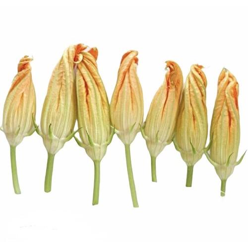 Квіти цукіні